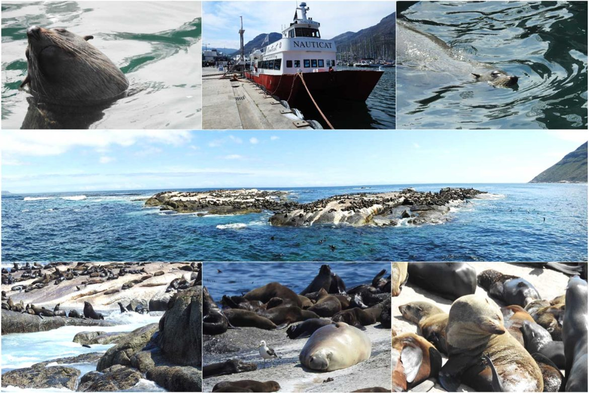 Seal Adventures on and around Duiker Island, Hout Bay